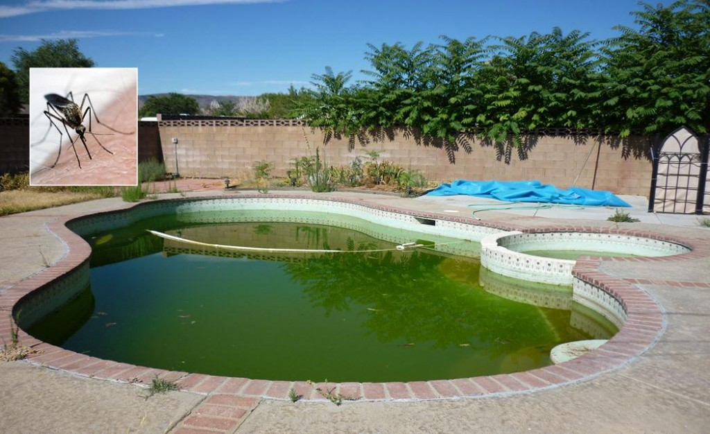 Unused pools are breeding grounds for mosquitoes, officials say. Report stagnant pools and other backyard sources to the Antelope Valley Mosquito & Vector Control District by calling 661-942-2917. (File)