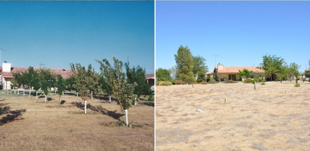 Retiree Bill Shumard was once excited to plant fruit trees in his backyard (left photo). Shumard has since been forced to remove his beloved fruit trees in an effort to conserve water (right photo). Still he says his water bill continues to go up. (All photos by Liz Diachun)