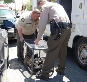 Animal control officers removed several cats from the family's home.