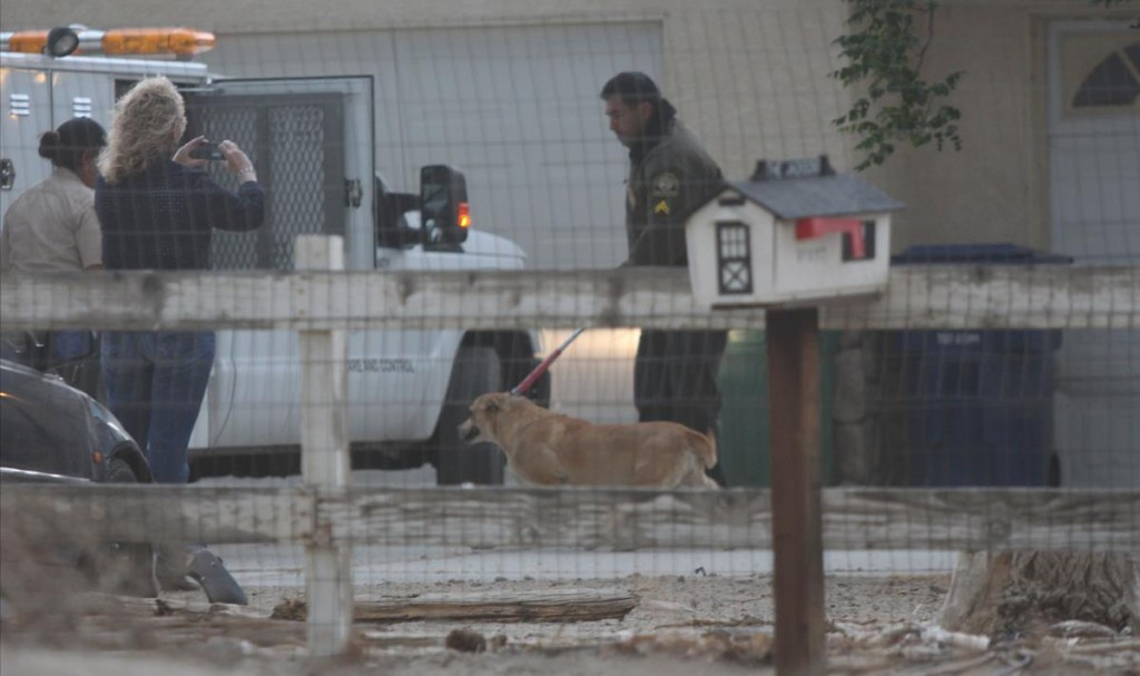 Authorities seized eight large dogs from a property Thursday evening just blocks away from where a 63-year-old woman was mauled to death as she took her daily morning walk. (Photos by TONY CHEVAL)