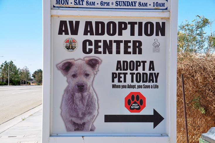 AV Adoption Center