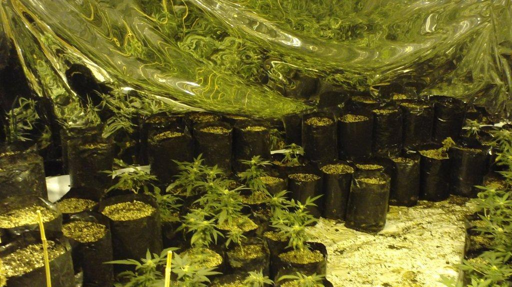 ... marijuana grow house containing plants with a potential production