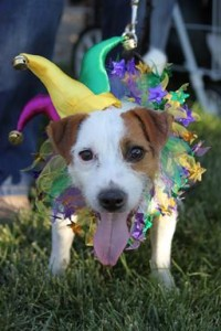 A  Pooch Costume Contest & Parade will take place July 18.