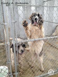 dog rescue powerhouse fire2