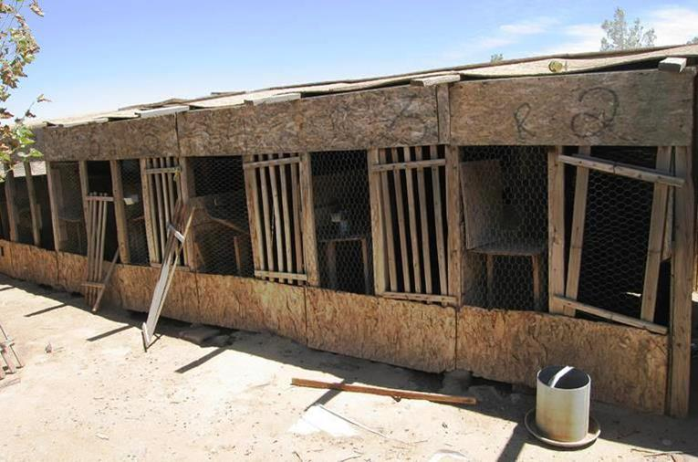 The raid was the culmination of an investigation into alleged cockfighting at a property in the 48000 block of 105th Street East. (Photos courtesy LASD)