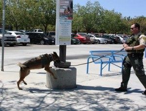 AVTA is monitored regularly by a full time Sheriff's Canine Unit.