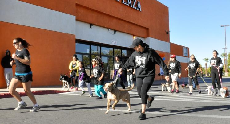 "Jeanette Portocarrero leads the ""Run with Pets"" 5K with Frankie. The pit bull was found with a gaping gash across his forehead, which required his ears to be pulled back in a mass of staples, earning him the name Frankenstein, or Frankie for short."