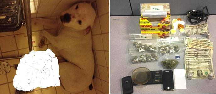 The dog apparently had been left in the shower stall since the prior day and had several small abrasions and lacerations. Packaged marijuana, methamphetamine, and hydrocodone pills were seized from the home. (Photos courtesy LASD)