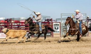 The rodeo will showcase top 12 contestants in the California Circuit. (Photo by JAMES STAMSEK)