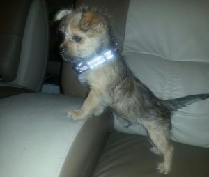 Stamsek recently placed Bentley in a loving home with two little girls.
