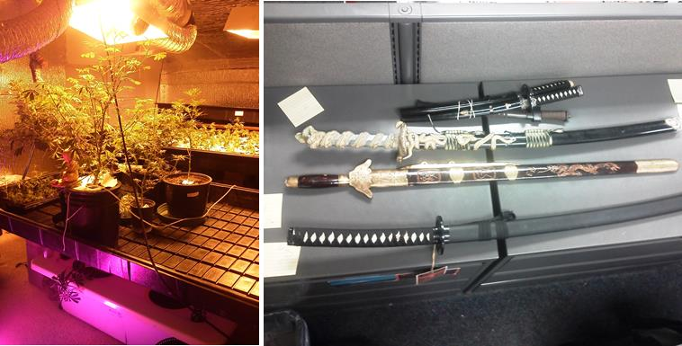 Deputies seized a hydroponic marijuana grow and Samurai swords Thursday when they arrested two  martial instructors for kidnapping and torturing a teen. (Photo courtesy LASD)