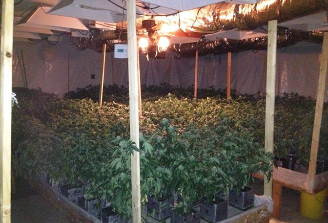 Deputies discovered 326 live marijuana plants and an elaborate hydroponic system while searching for two children at a home on the 1600 block of West Avenue L in Lancaster, officials said. (Photo courtesy LASD)