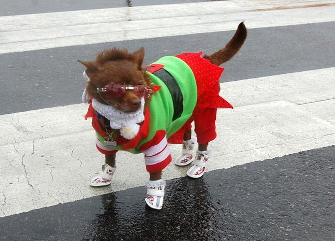 No wet feet for this stylish pooch!