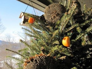 The life of your Christmas tree can be extended by using it as a bird feeder .