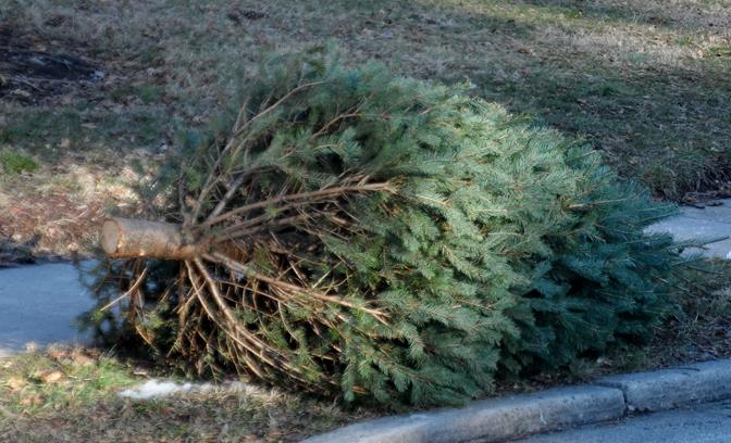 Recycle Your Tree After Holiday Festivities