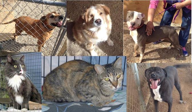 These are just a few of the pets that are in desperate need of a loving home, now that Garland Ranch has had  their license revoked. To view more of the pets in need, click here.