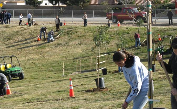 Hundreds of volunteers turned out to plant trees last year at Arnie Quinones park. (Courtesy city of Palmdale)