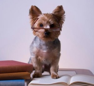 Books and Barks