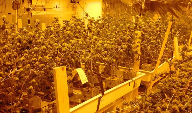 Deputies seized 189 marijuana plants in a downstairs bedroom and the garage of the residence.  (Photo courtesy LASD)