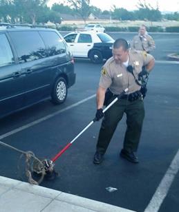 Badger caught in Lancaster 7.19.14 2