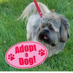 Gizmo Adopt a Dog