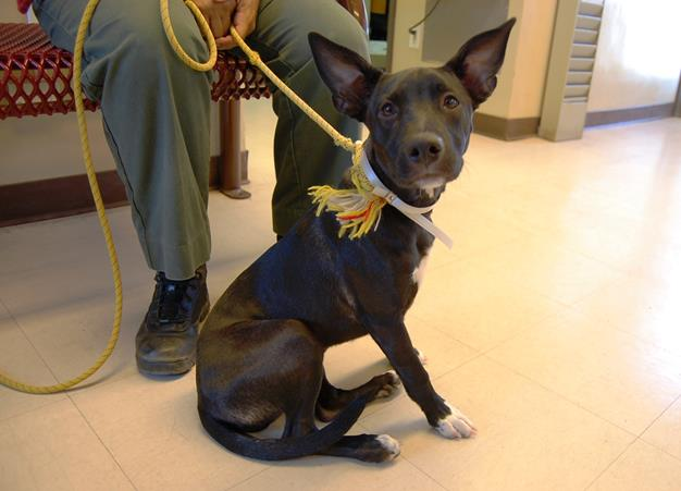 Daisy will recover at foster care before being placed up for adoption.