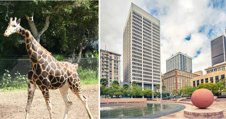 Palmdale's fall excursion schedule kicks off Sept. 13 with a visit to the Santa Barbara Zoo (left). The Historic Downtown Los Angeles Walking Tour takes place Oct. 11, and it includes a stop at Pershing Square (right). For more information on how to register, call 661-267-5611.