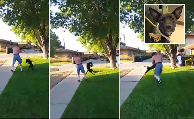 The man in these images (allegedly 53-year-old Robert Martin) punched and then swung a puppy around by its leash before slamming the puppy onto the street. The incident was captured in a cell phone video (view the graphic video below). The puppy, Daisy, is being placed in foster care before being put up for adoption.