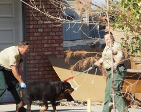 The dog was wounded, but was able to walk out of the home and taken to a veterinarian. (LUIS MEZA)