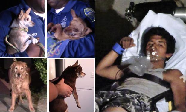 Four family dogs that appeared to be traumatized were removed from the Palmdale home during the early morning hours of Monday, Aug. 31, according to the Sheriff's Department. Andres Garcia is charged with inflicting serious injuries to two of the dogs, both Chihuahuas [top left]. One of the dogs had to be euthanized. Garcia, 22, was taken into custody on a stretcher after he allegedly swung one of the Chihuahuas at a responding deputy. [Photos by LUIS MEZA]
