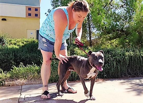 Bethany Newhill, the foster coordinator for Doggy Smiles Rescue, takes Crissie for a walk outside the Pets R Us Veterinary Hospital in Palmdale on Thursday, Sept. 3. (Photo by Jim Winburn)