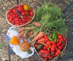 The Elm Avenue Community Garden is an organic community garden that grows and harvests vegetables, fruits and herbs to share with the community. [contributed]