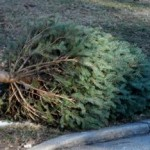 Residents encouraged to recycle Christmas trees