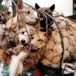LA County condemns slaughter of dogs and cats in China, South Korea