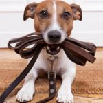 """Palmdale to host """"Yappy Hour—Thankful Edition"""" at Yellen Dog Park"""