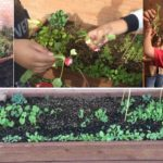 Local middle school students build gardens for functional skills program