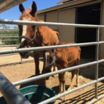 20+ horses rescued near Lancaster, investigation launched