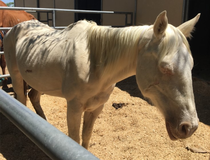 20  horses rescued near lancaster  investigation launched