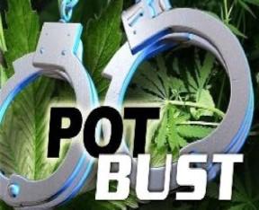 5 arrested in large marijuana bust near Rosamond