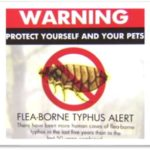 L.A. County to step up response to Typhus
