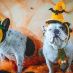 """Yappy Hour Howl-O-Ween"" at Yellen Dog Park"